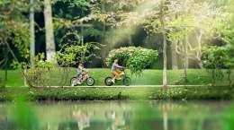 Cho Thuê Căn Hộ Rừng Cọ Ecopark